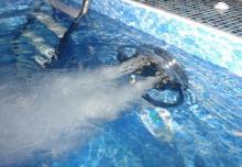 бассейн с противотоком фото